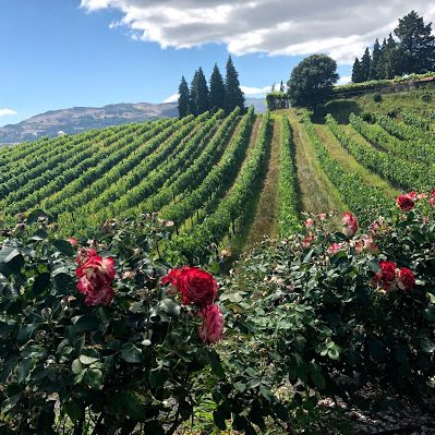 Vineyards at Paço de Calheiros